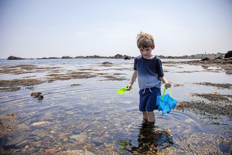 Undersökande tidvattentips för pojke på den New Hampshire kusten fotografering för bildbyråer