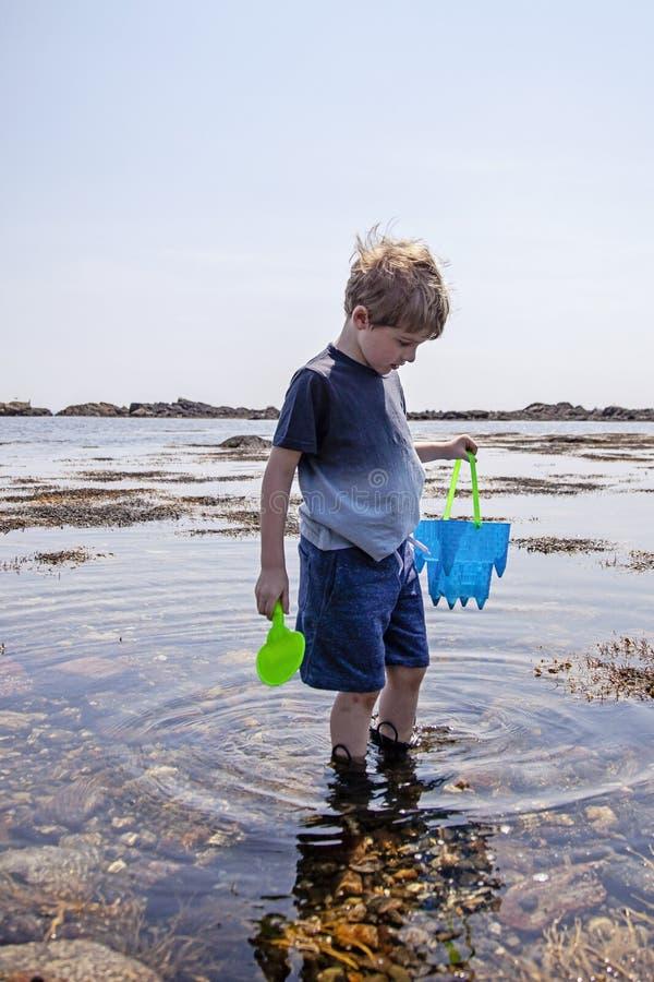 Undersökande tidvattentips för pojke på den New Hampshire kusten arkivbild