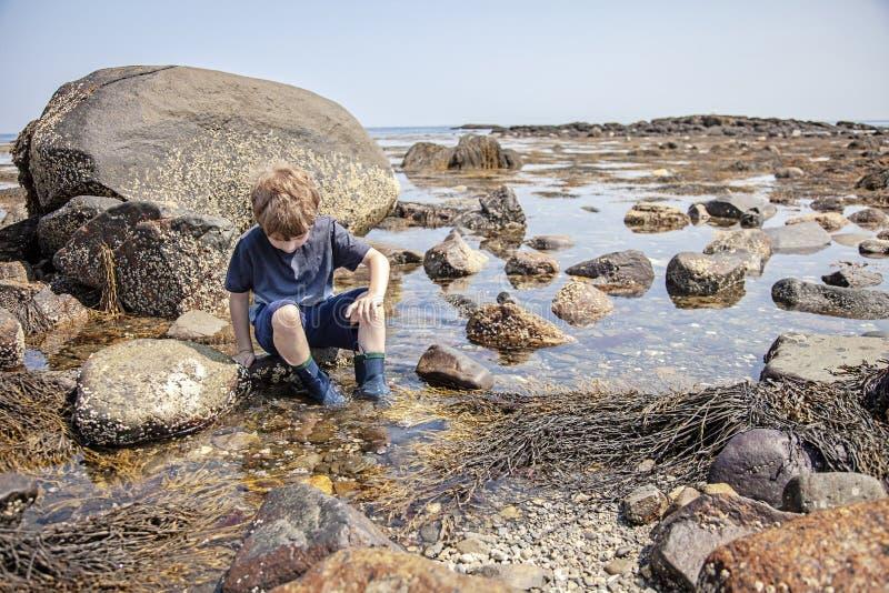 Undersökande tidvattentips för pojke på den New Hampshire kusten arkivfoton