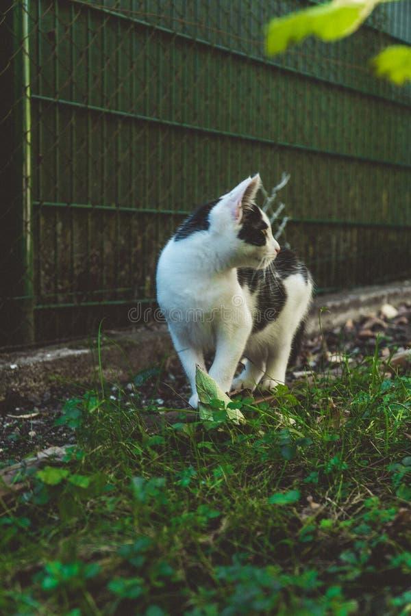 Undersökande växter för ung kattunge nära ett staket royaltyfri bild
