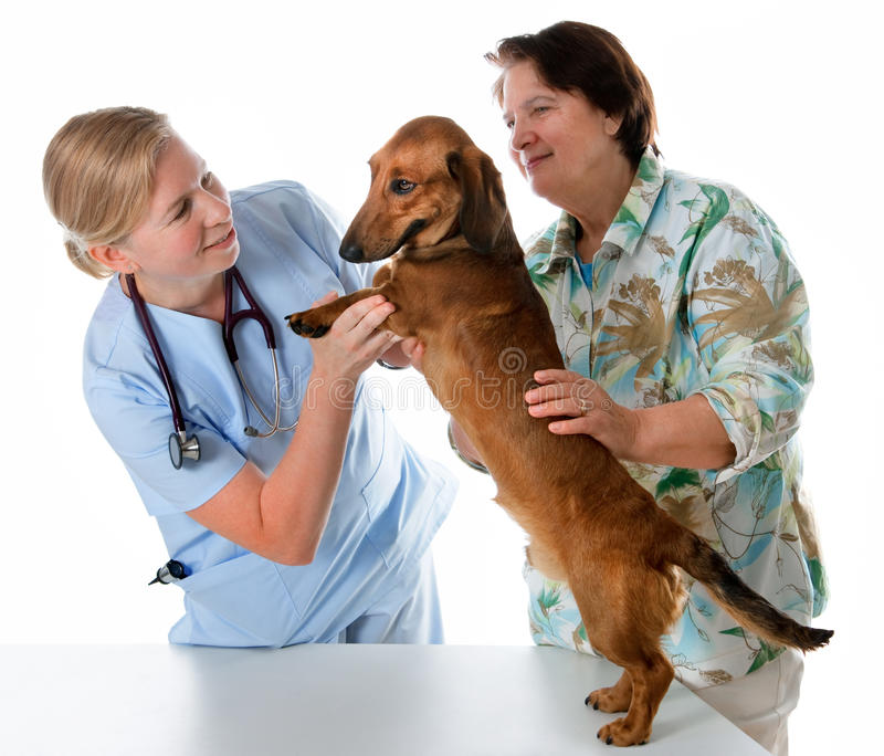 undersökande veterinär för hund royaltyfri foto
