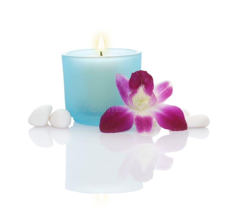 undersöker orchidpebbles royaltyfria bilder
