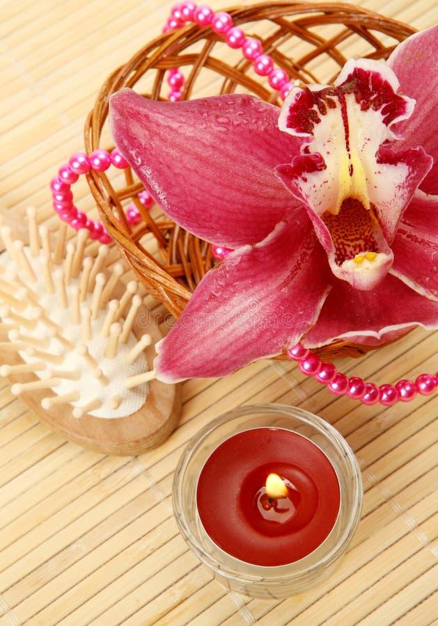 undersöker orchidpink royaltyfria bilder