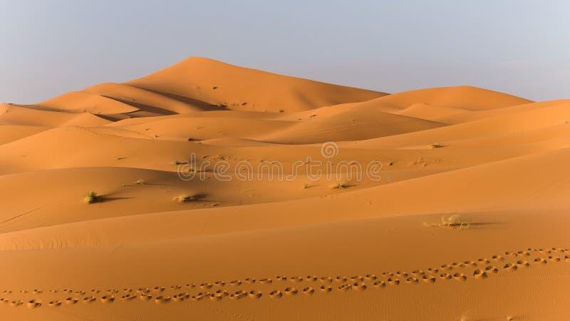 Undersökning av den sahara öknen i Marocko royaltyfri fotografi