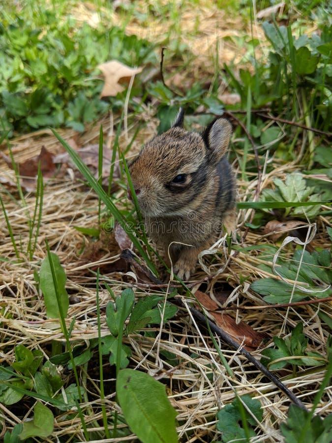 Undersökning av världen, kanin royaltyfri bild