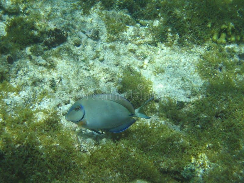 Undersea Adventure royalty free stock photography