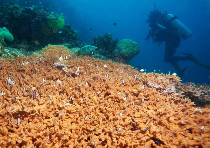 Download Undersea adventures stock photo. Image of hard, small - 25426952
