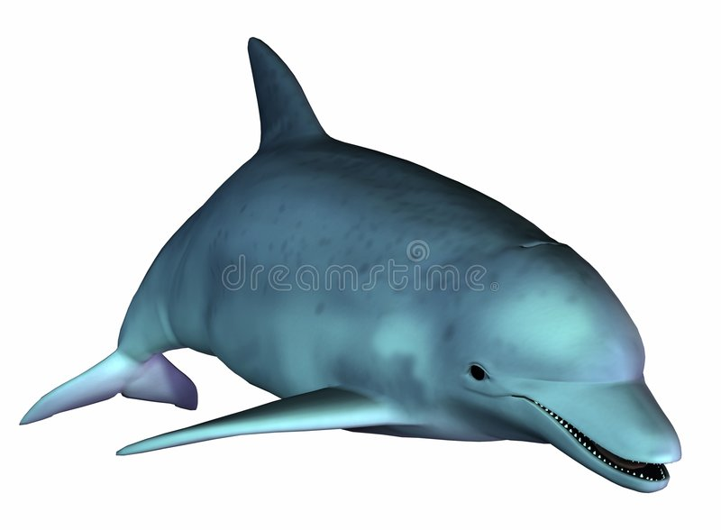 Undersea Dolphin Royalty Free Stock Image