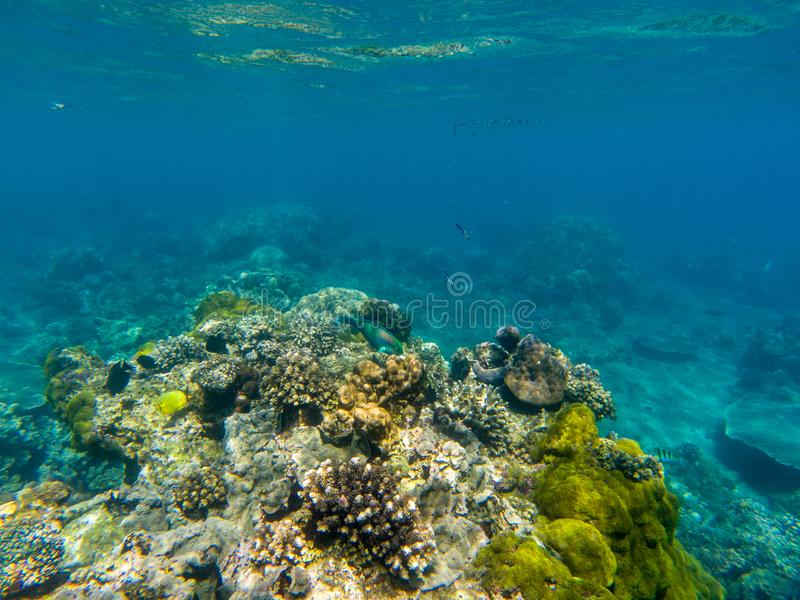 Undersea landscape with parrotfish and coral reef. Tropical seashore animals underwater photo stock photo