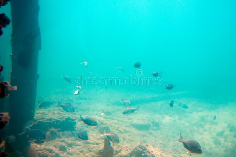 Undersea landscape seen from the Underwater Observatory, Busselton Jetty, WA, Australia royalty free stock photography