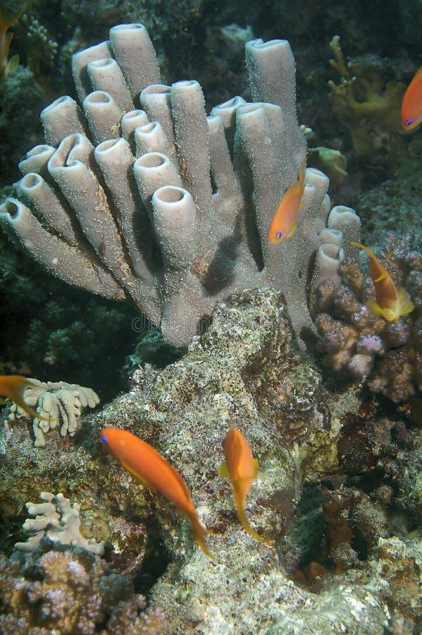 Download Undersea life stock image. Image of unusual, below, underwater - 3853261