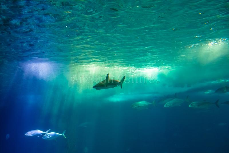 Undersea scene background royalty free stock photos