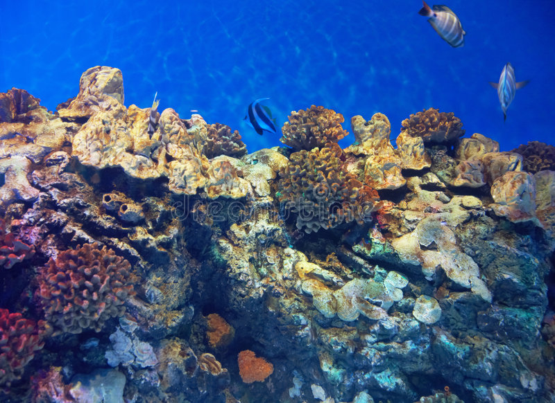 undersea sikt royaltyfria bilder