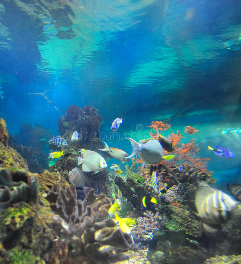 Download Undersea world stock image. Image of color, fishes, aquaria - 21287427