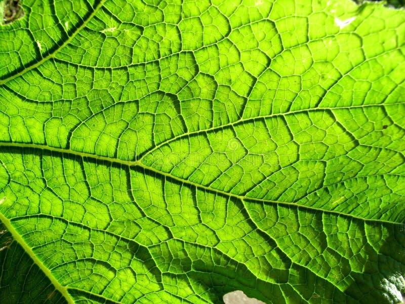 Underside ενός πράσινου φύλλου 2 στοκ φωτογραφίες με δικαίωμα ελεύθερης χρήσης