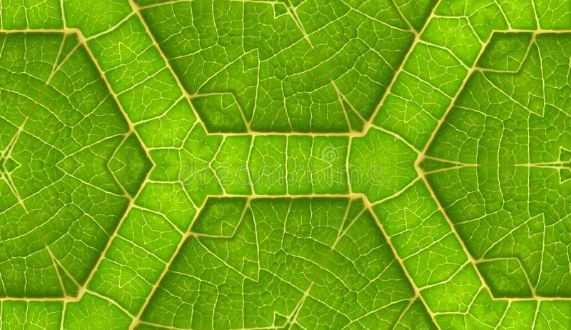 Underside της πράσινης ανασκόπησης κεραμιδιών φύλλων άνευ ραφής στοκ εικόνα