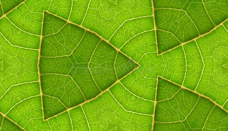 Underside της πράσινης ανασκόπησης κεραμιδιών φύλλων άνευ ραφής στοκ φωτογραφία με δικαίωμα ελεύθερης χρήσης