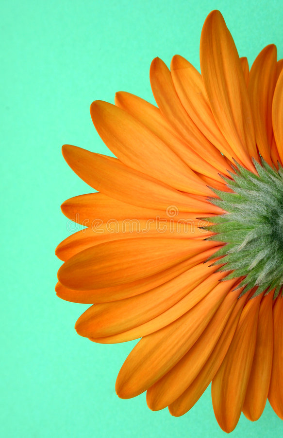 Download Underside of Flower stock photo. Image of orange, green - 153840