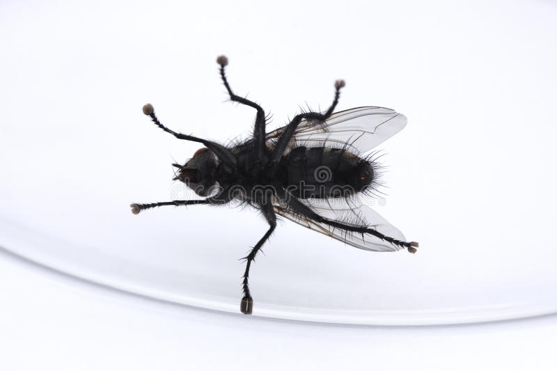 Download Underside Of A Fly In A Glass Stock Photo - Image: 15343426