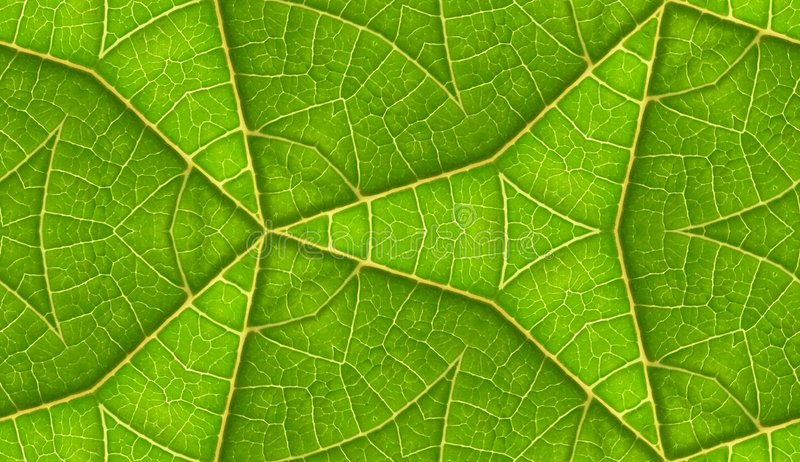 Underside Of Green Leaf Seamless Tile Background. A seamless pattern background texture of the underside of a green leaf royalty free stock images