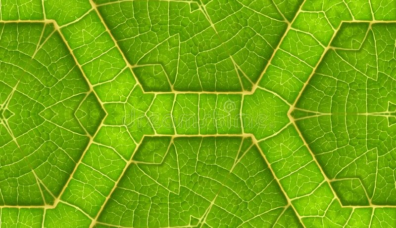 Underside Of Green Leaf Seamless Tile Background. A seamless pattern background texture of the underside of a green leaf stock image