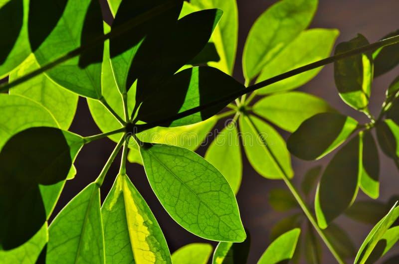 Underside of leaves