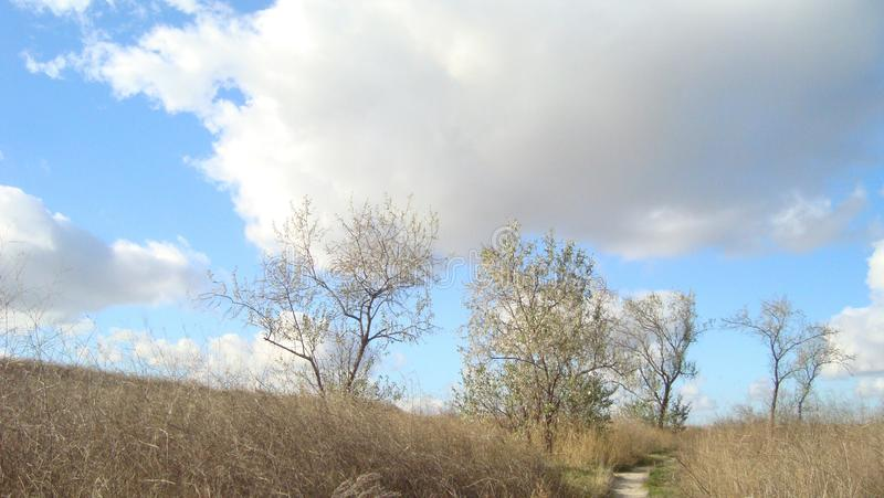 Undersized trees on an overgrown field under clouds of blue sky on a clear day. The steppe is overgrown with high dried grass. Overgrown path. Trees with rare royalty free stock photo