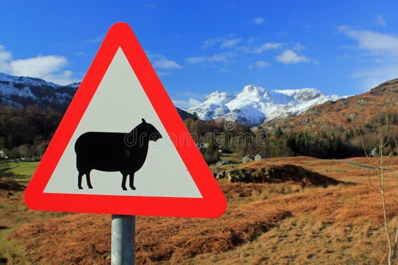 Underteckna för får med en bakgrund av korkade berg för snö royaltyfria foton