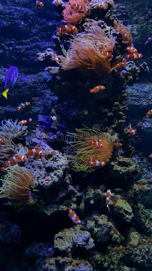 undervattens- royaltyfria foton