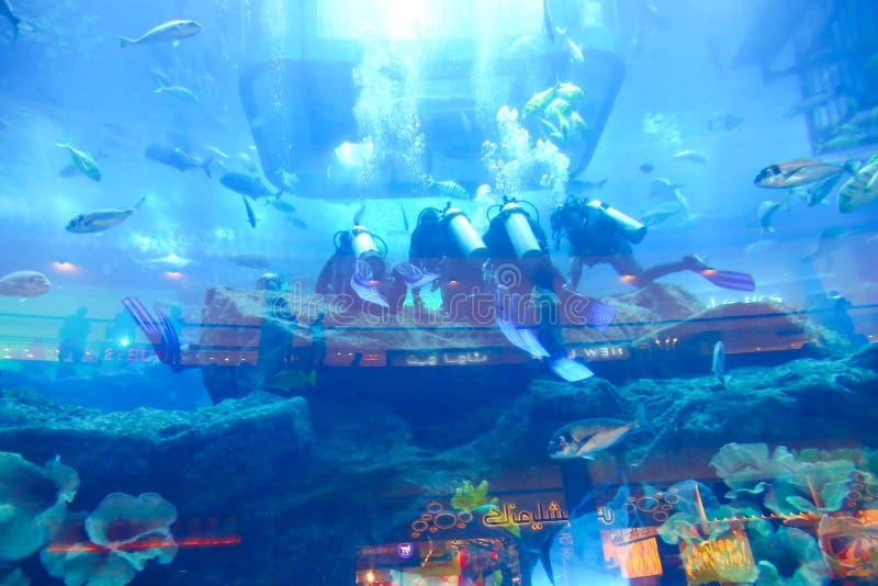 Undervattens- dykare royaltyfria bilder