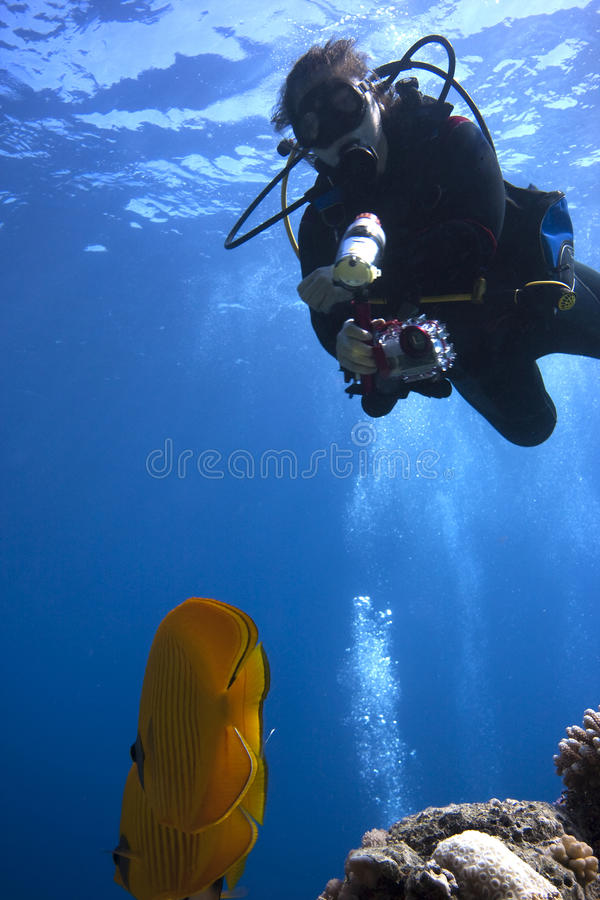 undervattens- dykarefotografscuba arkivbilder