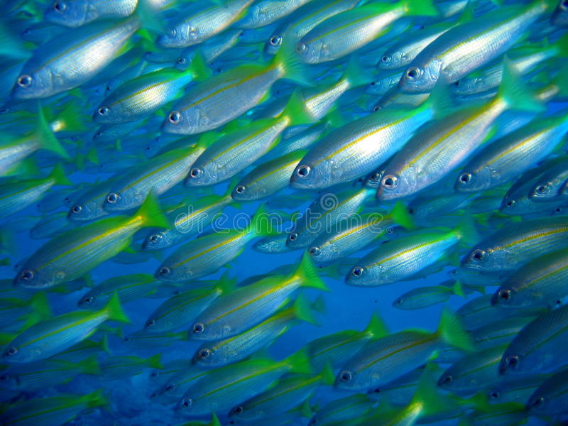 undervattens- färgrik fisk royaltyfria bilder
