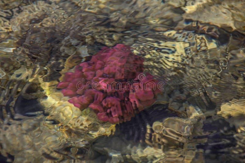 undervattens- f?rgrik livstid Undervattens- abstrakt textur royaltyfria foton