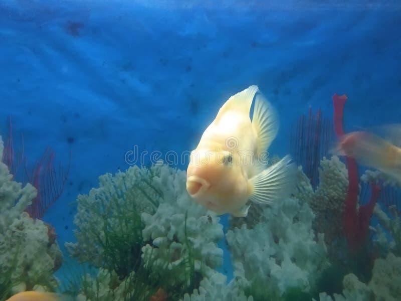 undervattens- fisk royaltyfri foto