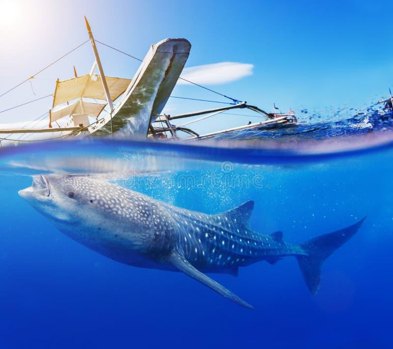 Undervattens- fors av en valhaj arkivbilder