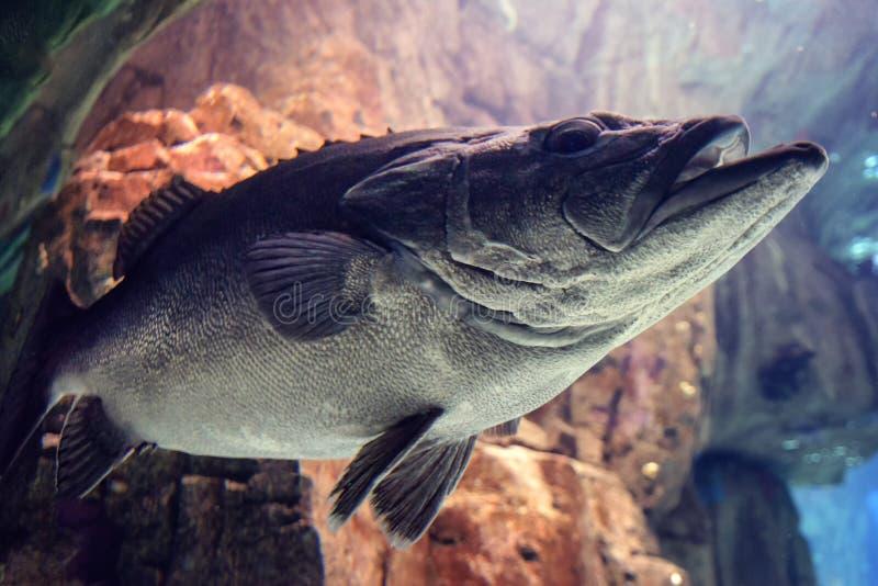 Undervattens- foto av reven och tropisk fishe royaltyfria foton
