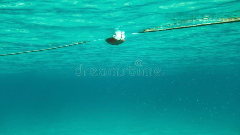 Undervattens- foto - simning in mot rep med havsbojet, stim av arkivfoto