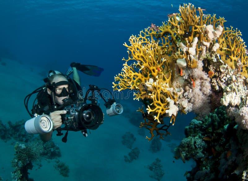 undervattens- fotograf royaltyfria bilder