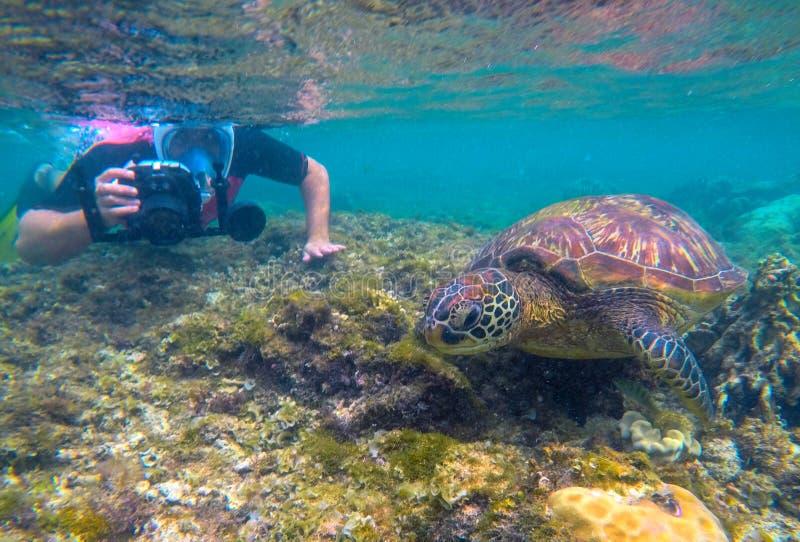 Undervattens- fotograf och havssköldpadda Turist- aktivitet som snorklar med sköldpaddor Undervattens- foto för marin- sköldpadda royaltyfri bild