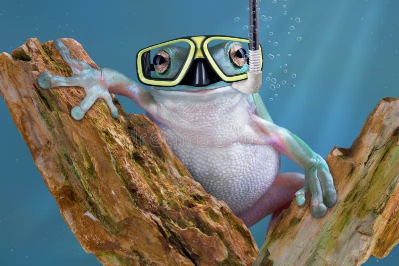 undervattens- groda arkivbild