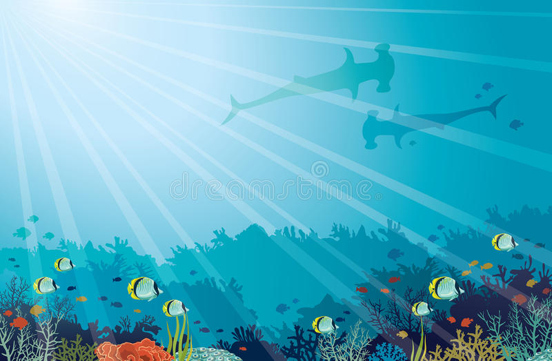 Undervattens- hav - Hummerhead hajar, korallrev, fjärilsfisk vektor illustrationer
