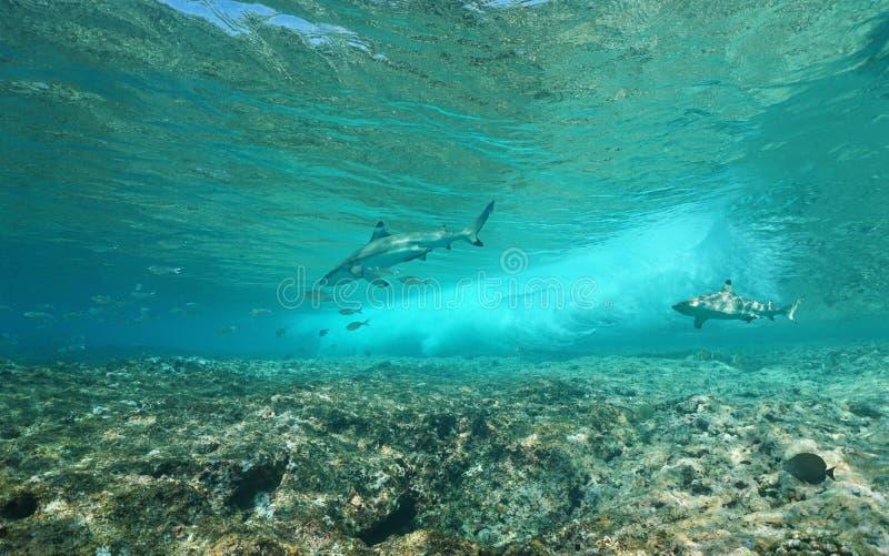 Undervattens- havsvåg som bryter på reven med hajar royaltyfri fotografi