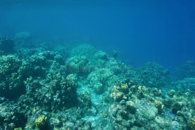 Undervattens- kant av korallreven ner till avgrunden fotografering för bildbyråer