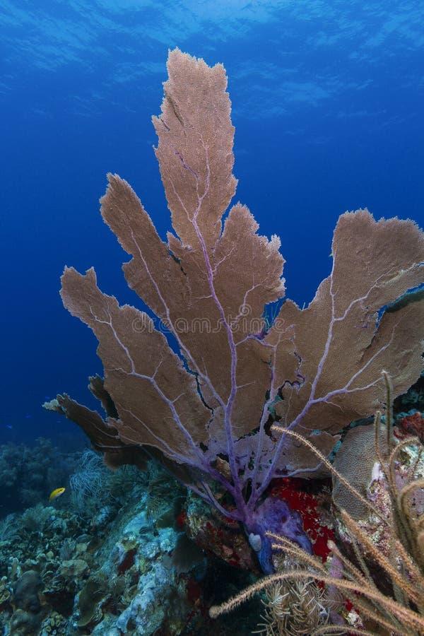 Undervattens- korall, Cayos Cochinos, Honduras arkivfoton