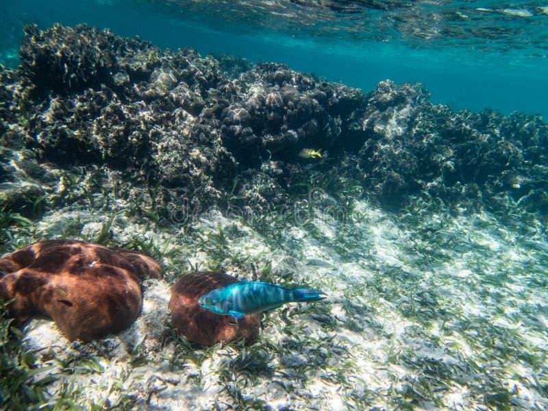 Undervattens- korall, fisk, sand och hav arkivfoton