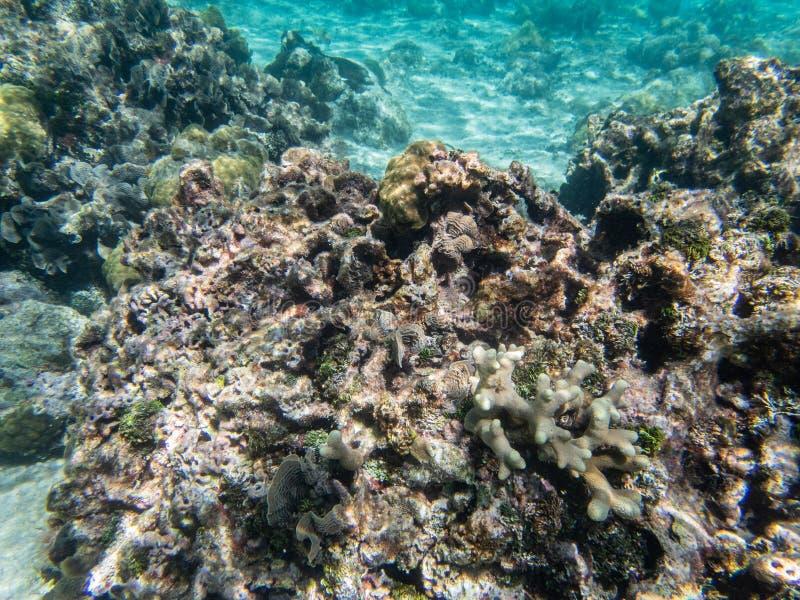 Undervattens- korall, fisk, sand och hav arkivbilder