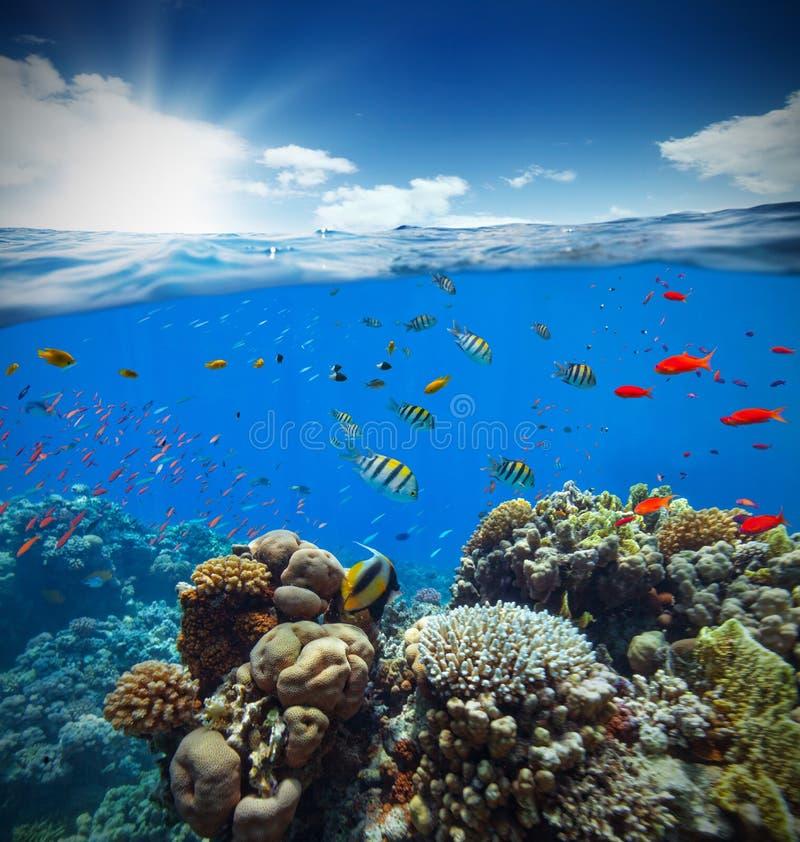Undervattens- korallrev med horisont- och vattenvågor royaltyfri fotografi