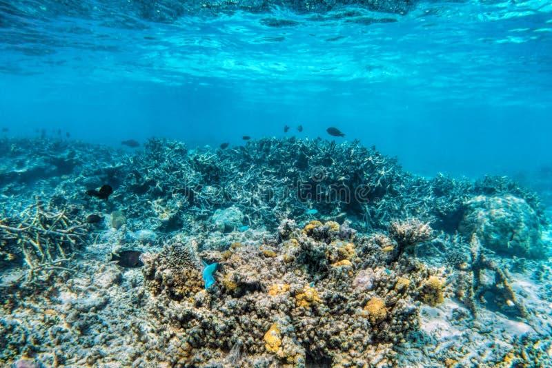 Undervattens- korallrev och fisk i Indiska oceanen, Maldiverna arkivfoto