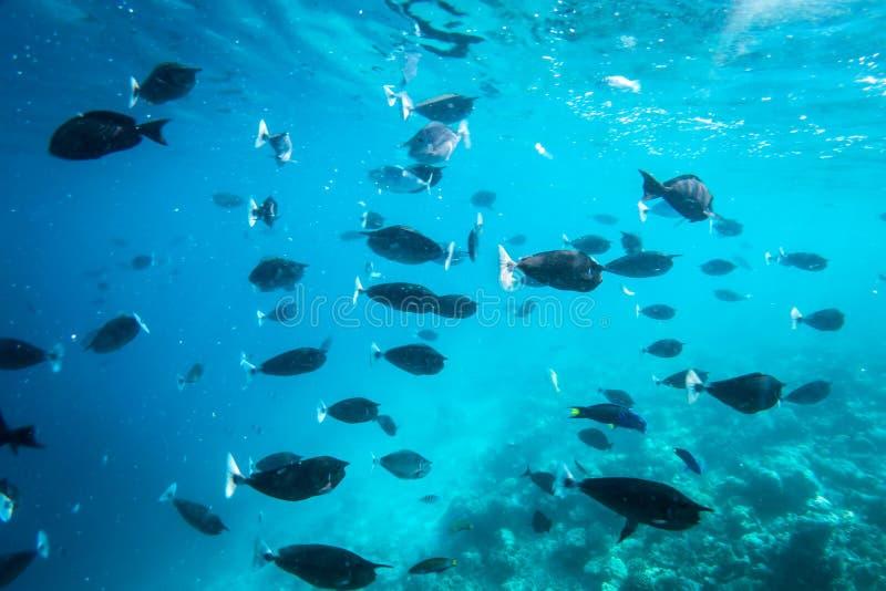 Undervattens- korallrev och fisk i Indiska oceanen, Maldiverna arkivbild