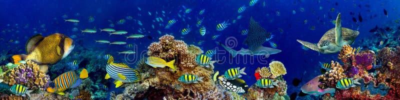 Undervattens- landskap för korallrev royaltyfri bild